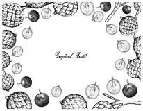 Hand Drawn Frame of Star Apple and Rattan Fruits. Tropical Fruits, Illustration Frame of Hand Drawn Bunch of Sketch Star Apple or Chrysophyllum Cainito and Stock Photography