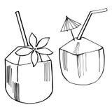 Hand drawn fresh coconut. Vector sketch illustration. Hand drawn fresh coconut on white background. Vector sketch illustration Royalty Free Stock Images