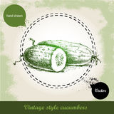 Hand drawn fresh cucumbers. Vintage sketch style organic eco vegetable Royalty Free Stock Image