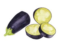 Hand drawn eggplant, watercolor. illustration for food design. royalty free stock image