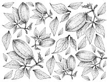 Hand Drawn of Fresh Fluted Pumpkins Background Stock Photo