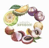 Hand drawn watercolor Illustration set of super food exotic fruits: litchi, longan, rambutan, durian Isolated on white background. Hand drawn fresh fruits Royalty Free Stock Photography