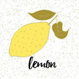 Hand drawn fresh lemon with leaves on the white background with drops. Stock Photography
