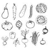 Hand Drawn Fresh Organic Vegetables Set Royalty Free Stock Image
