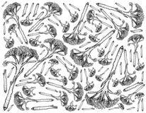 Hand Drawn of Fresh Raw Broccolini Background Royalty Free Stock Photo