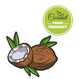 Colored Coconut On White. Hand drawn fresh walnut isolated on white background. Colorful close-up nuts. Vector illustration Stock Images