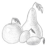 Hand drawn fruit  illustration Royalty Free Stock Image