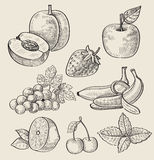 Hand drawn fruit Royalty Free Stock Images