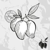Hand drawn fruits Royalty Free Stock Photos