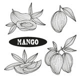 Hand drawn fruits Stock Photography