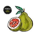 Hand drawn fruits Royalty Free Stock Images