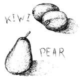 Hand drawn fruits. Summer fruit sketch set. Kiwi and pear. Stock Photography