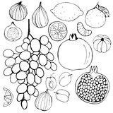 Hand-drawn fruits. Stock Photos