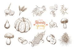 Hand-drawn fruits and vegetables. Thanksgiving and harvest festival. Engraved style. vector illustration