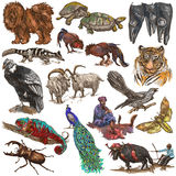 An hand drawn full sized colored collection, pack of animals. Is Royalty Free Stock Image