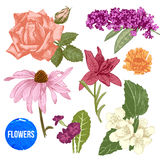 Hand drawn garden flowers set Royalty Free Stock Photos