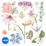 Hand drawn garden flowers set Royalty Free Stock Photo