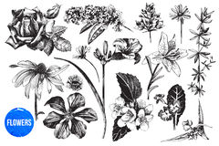 Hand drawn garden flowers set Royalty Free Stock Photography