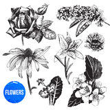 Hand drawn garden flowers set Stock Photography
