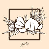 Hand drawn garlic. Hand drawn decorative garlic, design elements. Can be used for cards, invitations, gift wrap, print, scrapbooking, food menu, labels Royalty Free Stock Photos