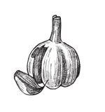 Hand drawn of garlic Stock Photo
