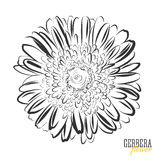 Hand drawn Gerbera flower sketch Royalty Free Stock Photo
