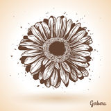 Hand drawn gerbera flower. Royalty Free Stock Images