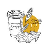 Hand drawn ginger herbal tea to go. Tea cup, roots and flower. Vectror engraved art. Spicy rhizhome vegetable. Food. Ingredient, aromatherapy, cooking. For Royalty Free Stock Image