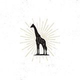 Hand drawn giraffe silhouette illustration. Vintage black giraffe with sunbursts isolated on white background. Good for. Tee shirt, clothing prints, mugs Royalty Free Stock Photo