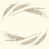 Hand drawn gold ripe wheat ears frame, border or corner element. Vector hand drawn illustration of a few gold ripe wheat ears isolated on beige background. Can Stock Photo