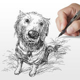 Hand drawn Golden retriever dog Stock Image