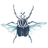 Hand drawn goliath beetle Stock Photo