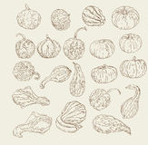 Hand Drawn Gourd and Pumpkins. Vector collection of hand drawn fall / winter gourds and squash sketches Stock Image