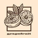 Hand drawn grapefruits Royalty Free Stock Photos