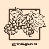 Hand drawn grapes Royalty Free Stock Photos