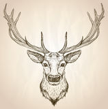 Hand drawn graphic illustration of of a deer head with big antlers. Royalty Free Stock Photography