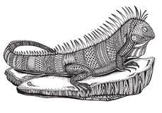 Hand Drawn Graphic Ornate Iguana On A Stone Royalty Free Stock Image