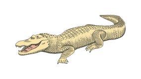 Hand drawn graphics, crocodile, alligator, croc. Engraving, stencil style. Colourful logo, sign, emblem, symbol. Stamp stock illustration