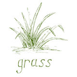 Hand drawn grass illustration. Royalty Free Stock Images