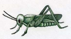 Hand drawn grasshopper Stock Photography