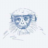 Hand drawn Gray langur Stock Photo