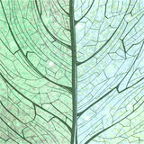 Hand drawn green background leaf structure Royalty Free Stock Images