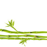 Hand-drawn green bamboo bacground with space for text Royalty Free Stock Photo