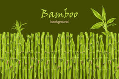 Hand-drawn green bamboo bacground with space for text Stock Photos