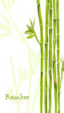 Hand-drawn green bamboo bacground with space for text Royalty Free Stock Photography