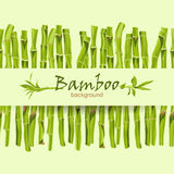 Hand-drawn green bamboo bacground with space for text Royalty Free Stock Images