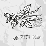 Hand drawn green been Royalty Free Stock Photo