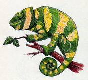 Hand drawn green chameleon with yellow stripes. Hand drawn green chemeleon with yellow stripes. It clinges to the branch and looks rather happy. Ink sketch Royalty Free Stock Images