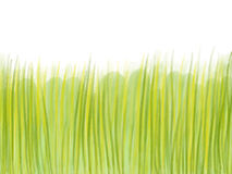 Hand drawn green grass on white background. Green grass illustration painted by watercolor and pencil Stock Photography