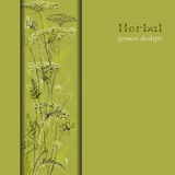 Hand drawn green herbs. Vertical border design background. Stock Image